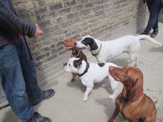 Canine Crews