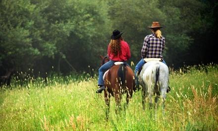 Wolfshohl Horse Training
