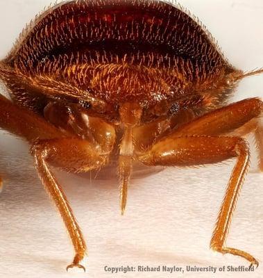 Prochem Pest Solutions Inc.
