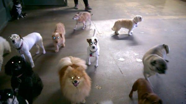 Camp Bow Wow SW Dallas / Cedar Hill Dog Boarding and Daycare