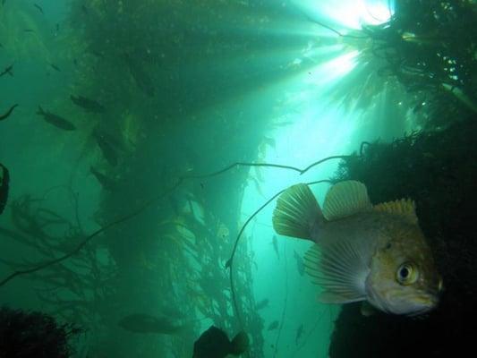 Aquanautics Dive