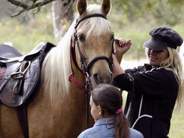 Chastain Mist Equestrian