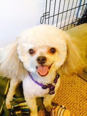 Bark! Bark! Daycare & Grooming