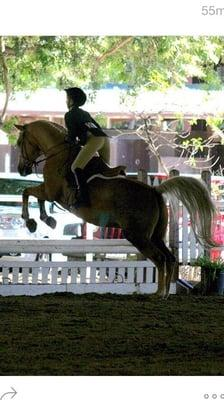 Equestricise