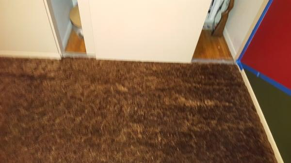 Tully Carpet Cleaning