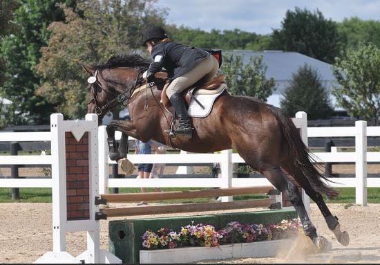Infinity Sport Horses