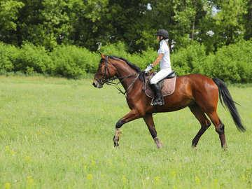 Different Times Equestrian Ventures