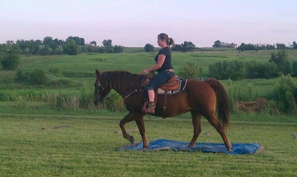 DT Horse Training
