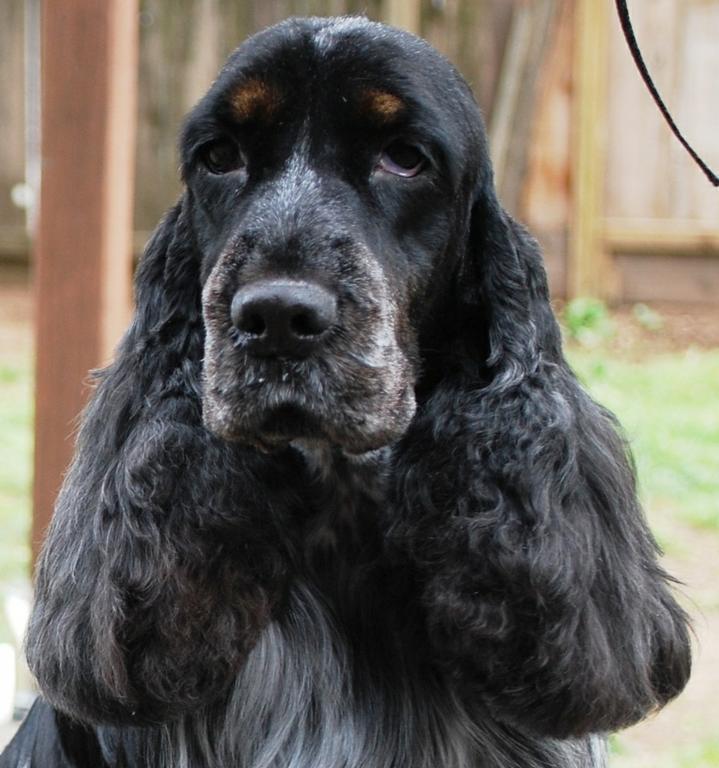 Chico Dog Parlor
