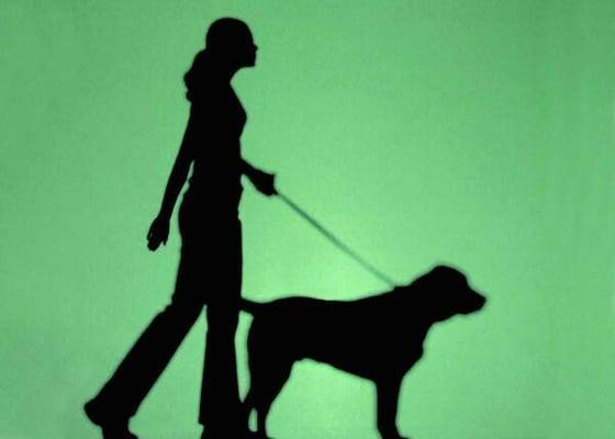 Char Walks My Dog
