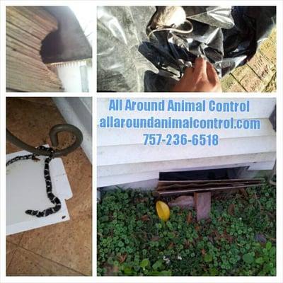 All Around Animal Control