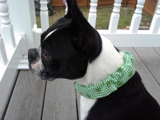 Buster Brown Dog Bandanas