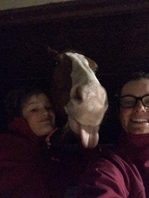 Gray's Equine