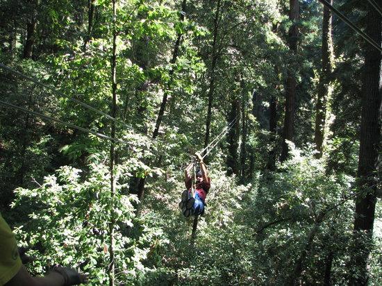 Mount Hermon Redwood Canopy Tours