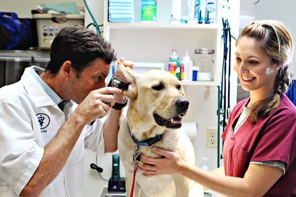 Torrey Pines Animal Hospital