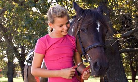 Lone Star Horsemanship