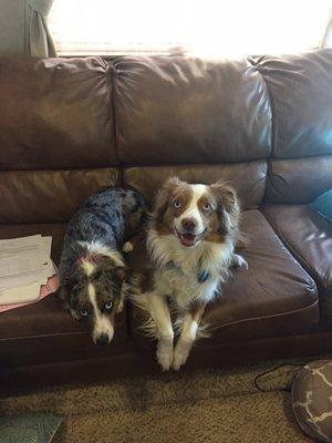 Pet Stop Veterinary Clinic