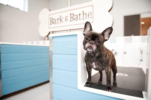 Bark & Bathe