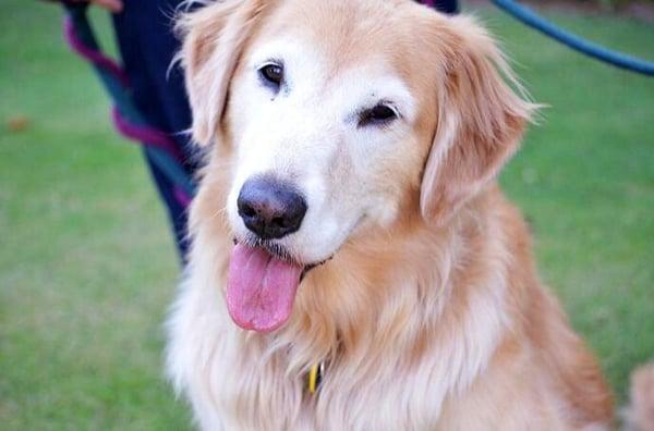 LA Woof Pet Care