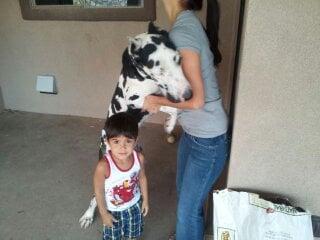 Dogon'Wild Training & Canine Care