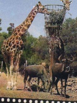 Safari Africana