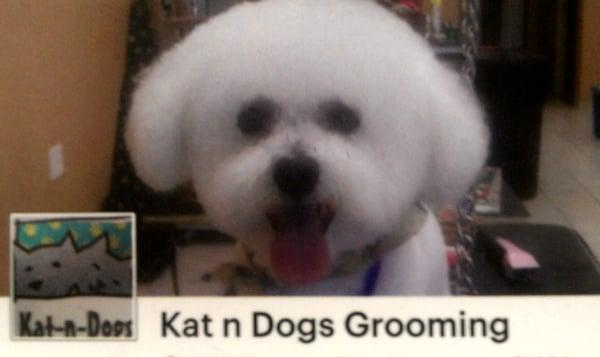 Kat -n- Dogs Grooming