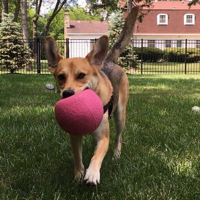 Fetch Pet Care of Hinsdale