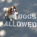 A Dog's Way Inn