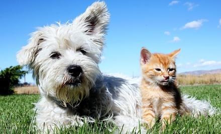 The Cat and Dog Clinic