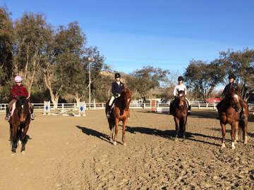 Zequestrian