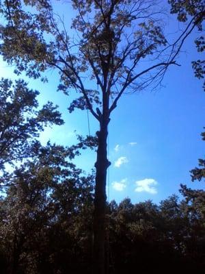 All Around Tree Care