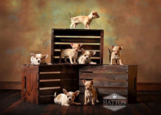 Hatton Photographic Design