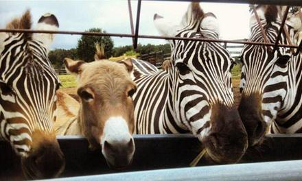 Why Not an American Ark Equestrian Park and Two by Two Petting Zoo