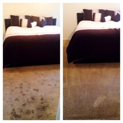 Mr Clean Carpet Care