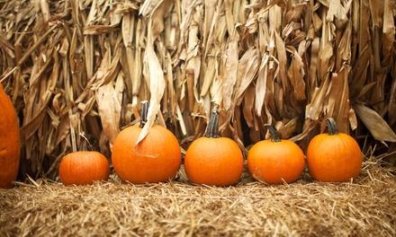 Pumpkinville Corn Maze