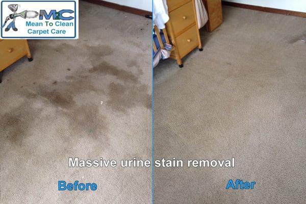 Mean 2 Clean Carpet Care