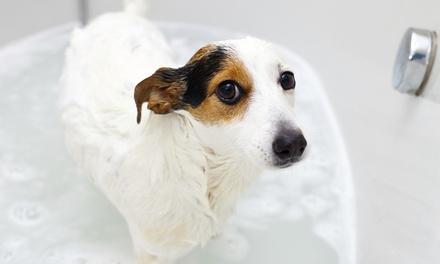 Pet Pantry and Dog Wash