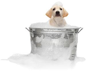 Canine Carousel Pet Spa