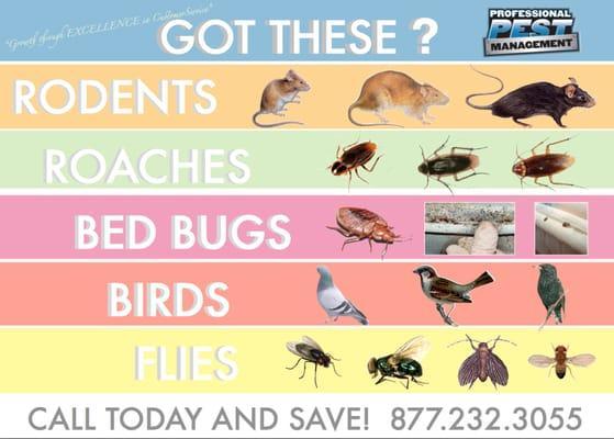 Professional Pest Management