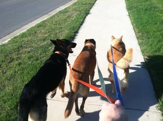 Dogventures