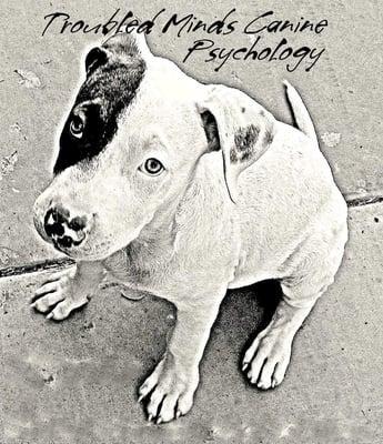 Troubled Minds Canine Psychology