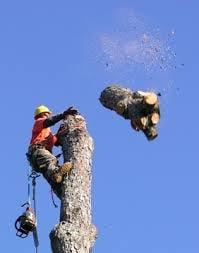 Fox Valley Tree Pro's
