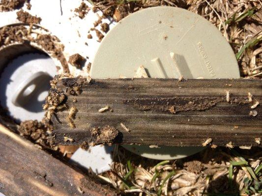 Bug Pro Pest & Termite Control