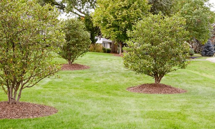 Weed Man - Rowan/Cabarus/Union County