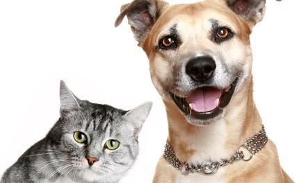 Pine Meadow Veterinary Clinic