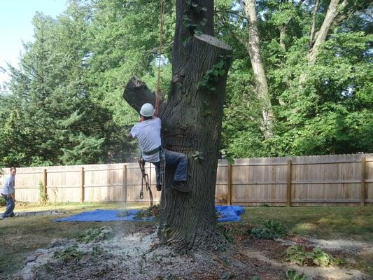 A & R Tree Service