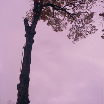 Thompson Tree Climbers & Landscape