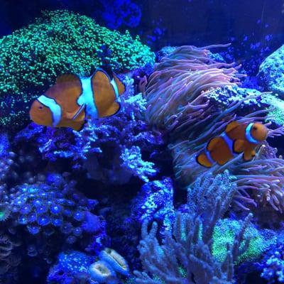Aquarium Care