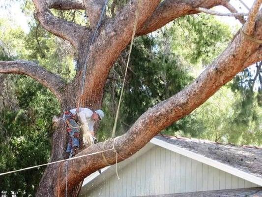 J and J Tree care