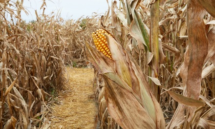 Cold Mountain Corn Maize